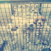 Photo taken at Pet 17 by Buse S. on 2/9/2015