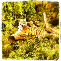 Photo taken at Allwetterzoo Münster by Ti M. on 5/12/2013