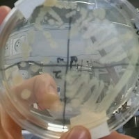 Photo taken at Labo Microbiologie by Laura v. on 2/21/2017
