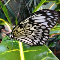 Photo taken at Victoria Butterfly Gardens by JT P. on 4/14/2013