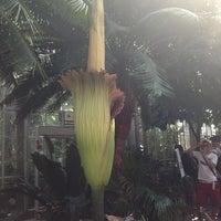 Photo taken at United States Botanic Garden by Matthew C. on 7/23/2013