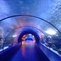 10/2/2012 tarihinde Ulas T.ziyaretçi tarafından Antalya Aquarium'de çekilen fotoğraf