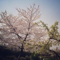 Photo taken at Jiading Wisteria Garden by Bryan Y. on 3/29/2013
