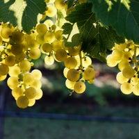 Photo taken at Canadian River Vineyard and Winery by Canadian River Vineyard and Winery on 9/23/2014