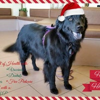 Photo taken at Caring Hands Animal Hos. by Caring Hands Animal Hos. on 12/12/2014