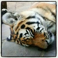 Das Foto wurde bei Kölner Zoo von Nadia *. am 9/8/2012 aufgenommen