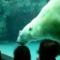 Photo taken at Polar Bear Museum by Atsushi A. on 10/30/2012
