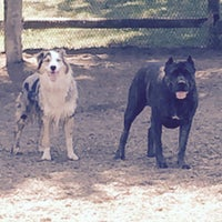 Photo taken at Stamford Dog Park by mike m. on 9/19/2015