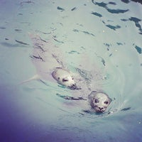 Photo taken at Scottish SEA LIFE Sanctuary by Megan P. on 7/4/2013