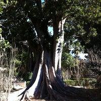 Foto tomada en Jardines de Murillo | Paseo Catalina de Ribera por Renato W. el 3/19/2013
