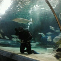 Photo taken at National Aquarium of New Zealand by Peter M. on 12/29/2012