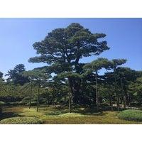 Photo taken at Neagarinomatsu Pine by etsuko on 9/7/2014