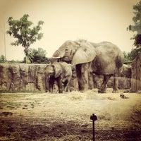 7/19/2013 tarihinde Erica S.ziyaretçi tarafından Indianapolis Zoo'de çekilen fotoğraf