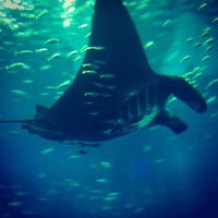 Photo taken at S.E.A. Aquarium by Denise on 3/2/2013