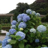 Photo taken at あやめ園 by ysbay98 m. on 7/14/2013