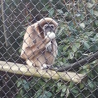Photo taken at Monkey World - Ape Rescue Centre by Beverley P. on 4/3/2013
