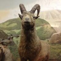 Photo taken at Latvijas dabas muzejs | Latvian Museum Of Natural History by Gatis G. on 11/11/2012