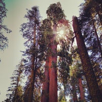 Photo taken at Giant Trees Meadow by Andrew G. on 10/3/2013