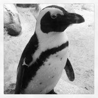 Photo taken at Minnesota Zoo by Brooke J. on 3/3/2013