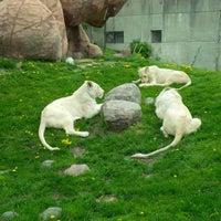 Photo taken at Toronto Zoo by Márcio Alexandre R. on 5/18/2013