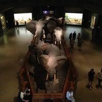 Foto tirada no(a) Museu Americano de História Natural por Jia em 6/5/2013