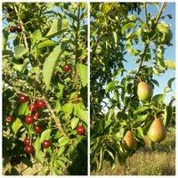 Photo taken at Toydemir köyü Kırım Hatıra Ormanı by --------- on 7/16/2015