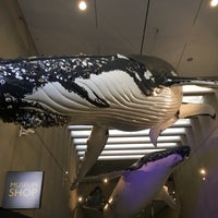 Photo taken at Queensland Museum Whale Mall by AJ L. on 4/25/2017