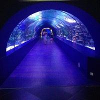 5/14/2013 tarihinde Svetlana S.ziyaretçi tarafından Antalya Aquarium'de çekilen fotoğraf