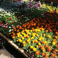 Photo taken at Flowercraft Garden Center by Steph W. on 3/21/2015