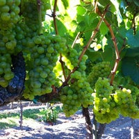 Photo taken at Saralee Vineyards by Kerry R. on 8/30/2012