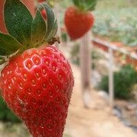 Photo taken at Big Red Strawberry Farm (Agro Tourism Garden) by Faiz Z. on 4/11/2012