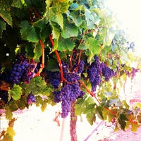 Photo taken at Sonoma Valley by Anna N. on 9/9/2012