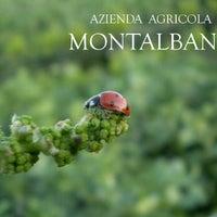 Foto scattata a AZIENDA AGRICOLA MONTALBANO da Azienda Agricola Montalbano il 5/30/2012