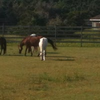 Photo taken at Ocracoke Pony Pasture by Tonya L. on 9/5/2012