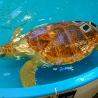 Photo taken at Georgia Sea Turtle Center by John C. on 3/24/2012
