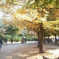 Photo taken at 올림픽공원 귀룽나무 by 이해열 on 10/30/2011
