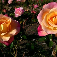 Photo taken at Sinisippi Rose Garden by Mary D. on 10/6/2011