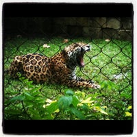 Foto scattata a Palm Beach Zoo da Jessica O. il 6/8/2012
