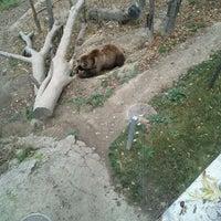 Das Foto wurde bei Bärenpark von Andy K. am 11/11/2011 aufgenommen
