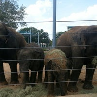 Photo taken at Houston Zoo by Elizabeth Z. on 8/11/2012
