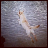 Photo taken at Shelby Farms Dog Park by Dishcrawl M. on 3/18/2012