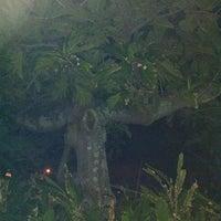 Photo taken at The Ulu Tree by David F. on 1/25/2011