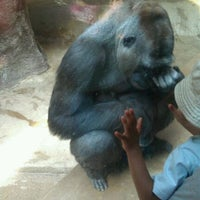 Photo taken at Great Ape House at the National Zoo by Emma W. on 7/20/2011