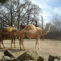 Photo taken at Roger Williams Park Zoo by Angela J. on 4/14/2012