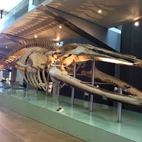 Photo taken at Melbourne Museum by Eileen C. on 2/10/2012