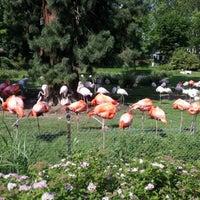 Das Foto wurde bei Kölner Zoo von hastmeinwort am 6/2/2012 aufgenommen