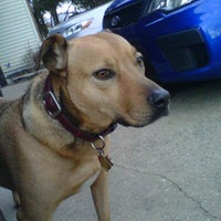 Photo taken at Dog Run by Gillian L. on 12/28/2011
