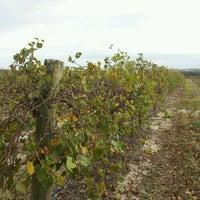 Photo taken at Lakeridge Winery & Vineyards by surfingislander on 11/19/2011