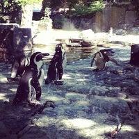 Photo taken at Prague Zoo by Dmitry Z. on 8/23/2012