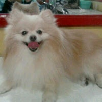 Photo taken at Golden Pet Shop by Vina M. on 9/8/2011